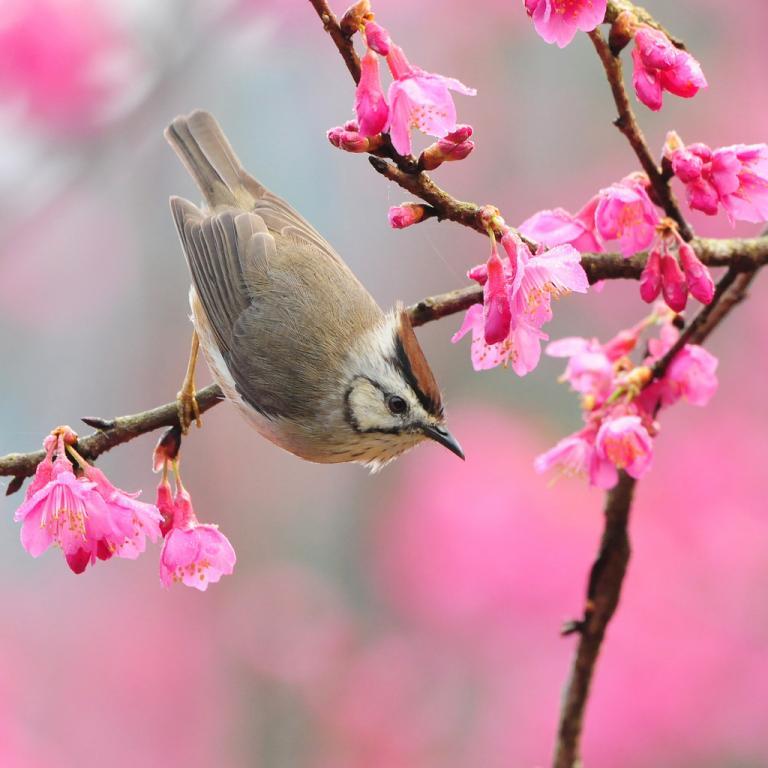 Putni mīl pavasari!Un mēs arī!